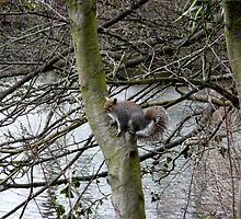 Squirrel On A Tree by Mikoni
