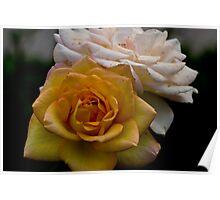 Roses Macro Poster