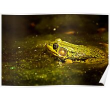 Green Frog In Algae Poster