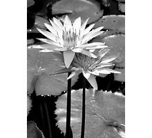 vibrant lily, black and white Photographic Print