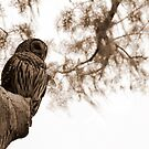 Wacissa Owl in Sepia Tone by Troy Spencer