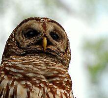 wacissa owl, bust by Troy Spencer