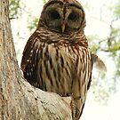 wacissa owl, eye to eye by Troy Spencer