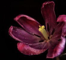 Night Blossom by terrylazar