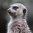 Meerkat by Jenifer