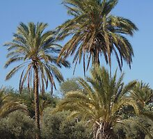 Palm trees  by mariaevangelou