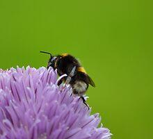 Bumble Bee by AmarylisValdeon