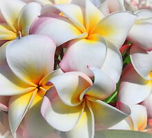 Soft Plumeria Natural Bouquet by DJ Florek