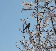 lonely black bird on a snowy tree by mrivserg