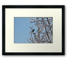 lonely black bird on a snowy tree Framed Print