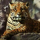 Jaguar by Kirsty Hodge