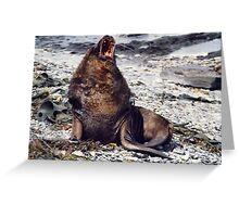A Sea Lion Greeting Card