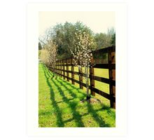 Sun Shining Along Fence Art Print