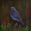 Mountain Bluebird by Rich Summers