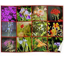 Sapientia floralis  Poster