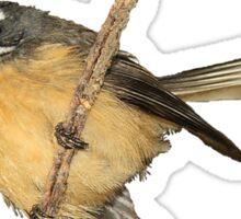 Fantail T-Shirt - New Zealand Bird Series Sticker