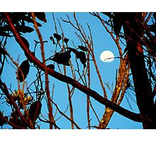 AUTUM MOON AT SUNUP Photographic Print