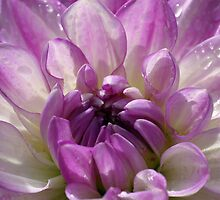Pink Dahlia by Cathy L. Gregg