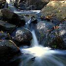 Stream Rosebud by KeepsakesPhotography Michael Rowley