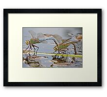 Dragons Landing Framed Print