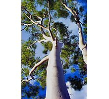 Ghostly Limbs Photographic Print