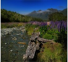 What Do You Say When Purple Fields Of Fiordland Smile At You? Photographic Print