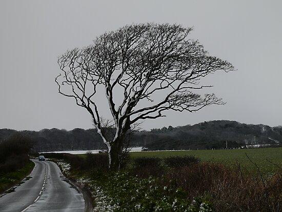 Bleak Tree by DavidFrench