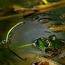 Female Bull Frog by Lisa G. Putman