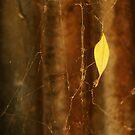 Leaf in web by Katherine Kakafikas