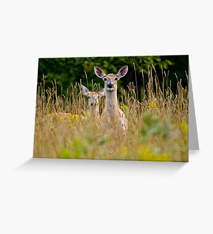 White Tailed Deer in Grass - Ottawa, Ontario Greeting Card
