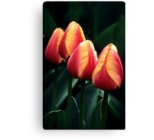 Four Tulips Canvas Print