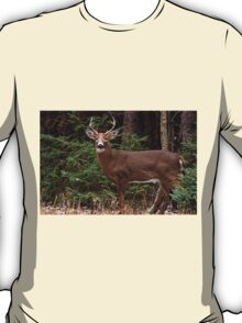 Buck White-tail Deer in the forest- Ottawa, Ontario T-Shirt