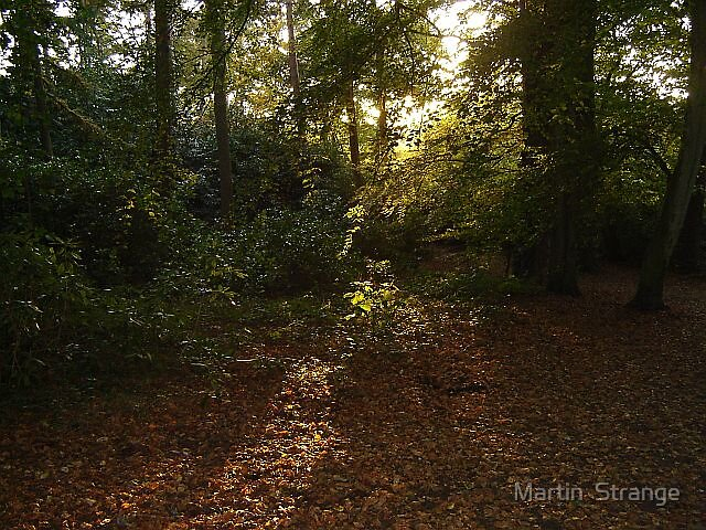 Upton Country Park by Martin  Strange
