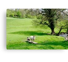 Sheep Bridge! at Thorpe Canvas Print