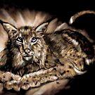 Lynx by Herbert Renard