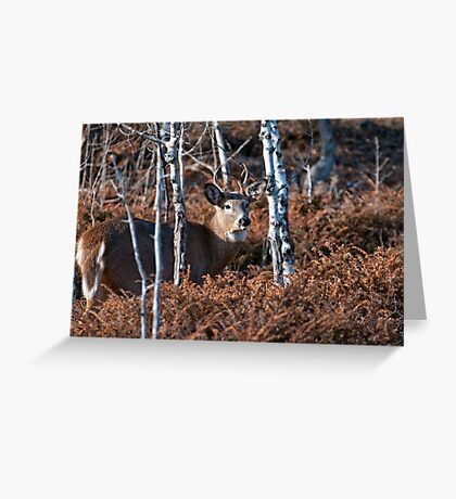 Deer Buck - Ottawa, Ontario - 4 Greeting Card