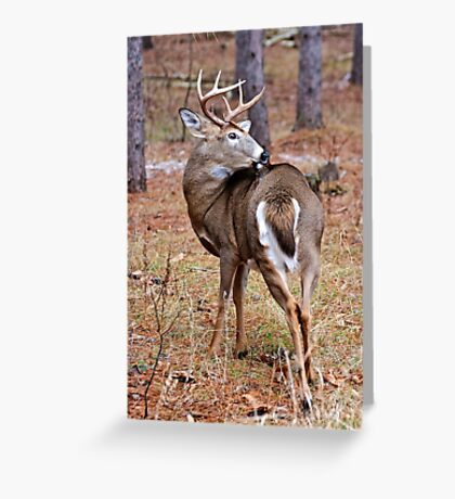 Deer Buck - Ottawa, Ontario - 3 Greeting Card