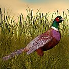 Ring-Necked Pheasant by Walter Colvin