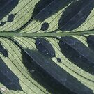 Embroided leaf by melbourne