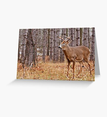 Deer Buck - Ottawa, Ontario - 2 Greeting Card