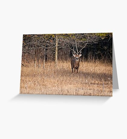 White Tailed Deer Buck - Ottawa, Canada - 3 Greeting Card