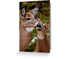 White Tailed Deer and Baby Greeting Card