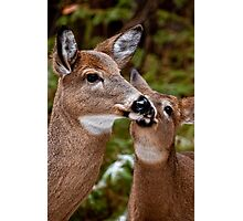 White Tailed Deer and Baby Photographic Print