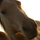 Looking the Horse in the Mouth by Pamela Maxwell