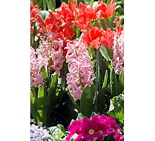 Array Of Spring Flowers Photographic Print