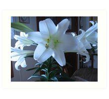 Easter Lily  Extra petals Art Print