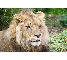 122014 lion Photographic Print