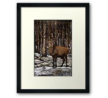 Forest Monarch Framed Print
