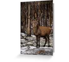 Forest Monarch Greeting Card