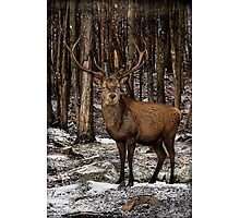 Forest Monarch Photographic Print